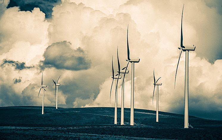 Дослідження: розвиток відновлюваних джерел енергії загрожує біорізноманіттю планети
